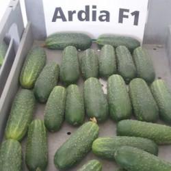 Ардиа F1 (Ardia)