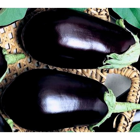 Черна перла F1 (Black Pearl)