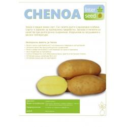Ченоа - Chenoa